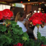 Petits jardins de Boujean 3 septembre 2016